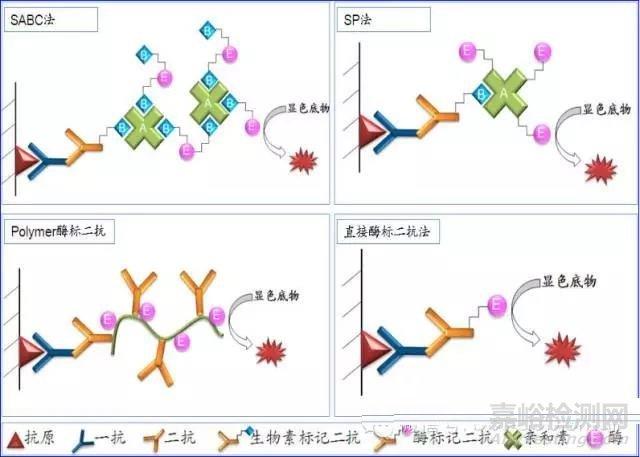 免疫组化(IHC)二抗原理及选择